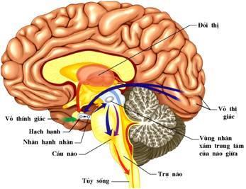 chụp mri não